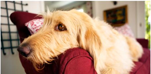 Dog wants to watch TV, Critter Files, Dawn Walton